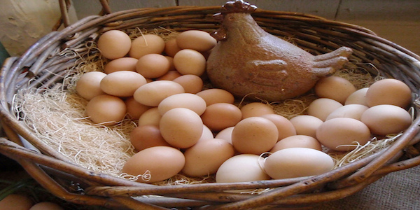Fatten Your Nest Egg with Sanderson Farms